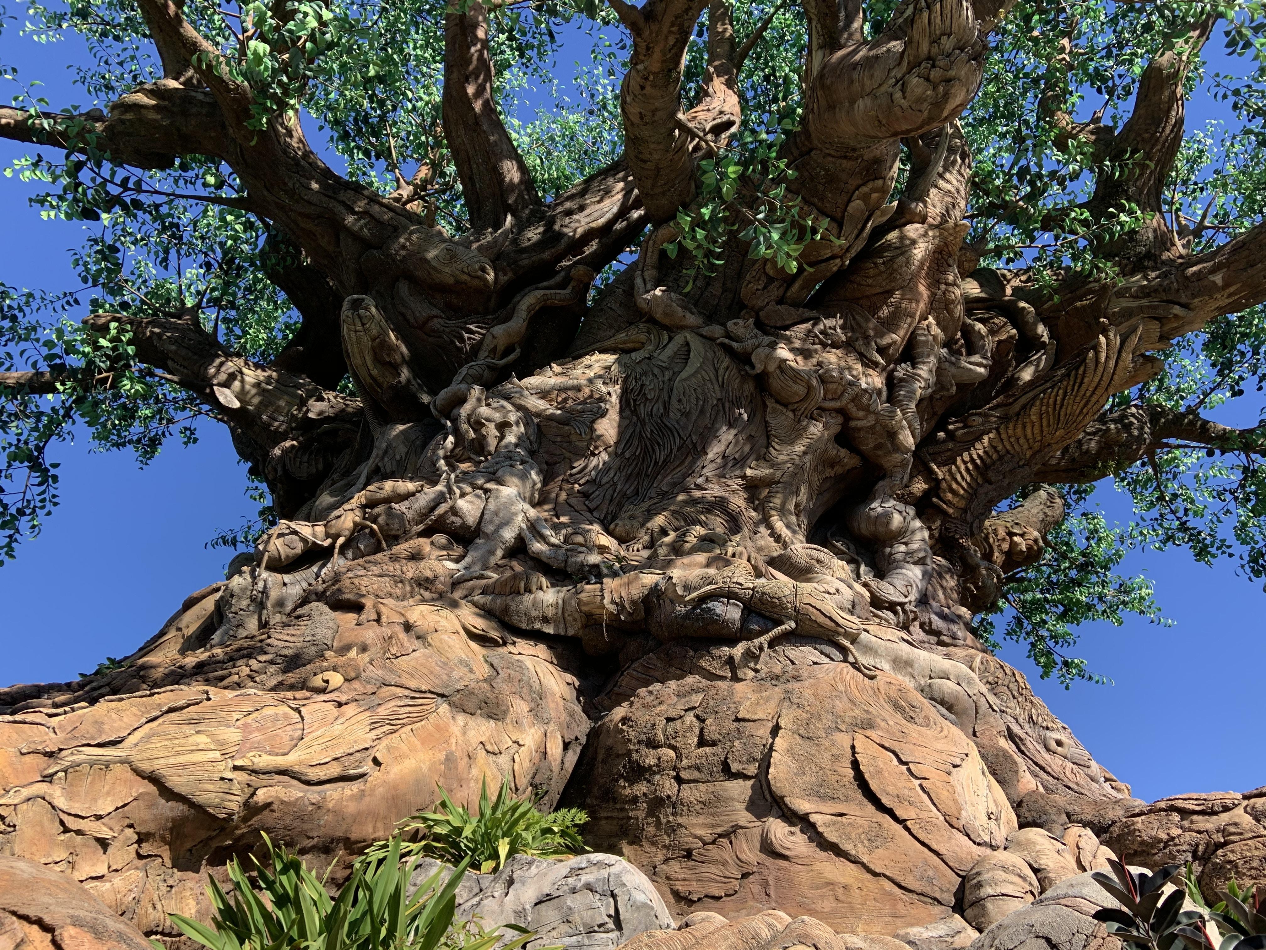 Tree of Life 1/20/20