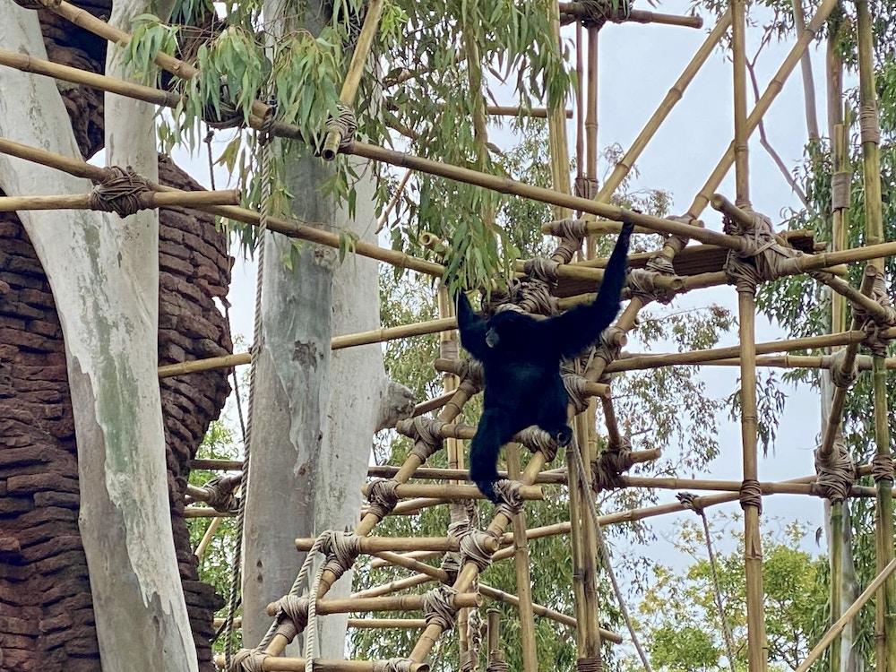 Animal kingdom monkey