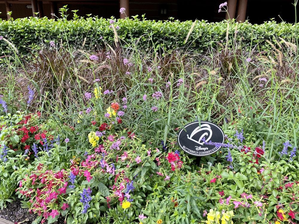 "Butterfly garden fort wilderness ""width ="" 1000 ""height ="" 750 ""data-lazy -src = ""https://wdwnt-buzzy.imgix.net/2020/03/Butterfly-garden.jpg?auto=compress%2Cformat&fit=scale&h=750&ixlib=php-1.2.1&q=84&w=1000&wpsize=medium&is-pending- load = 1 ""> <noscript> <img class="